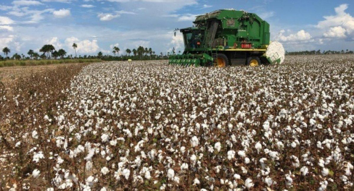 AGRONEGÓCIO | Governo promove 1º Workshop da Cadeia Produtiva do Algodão