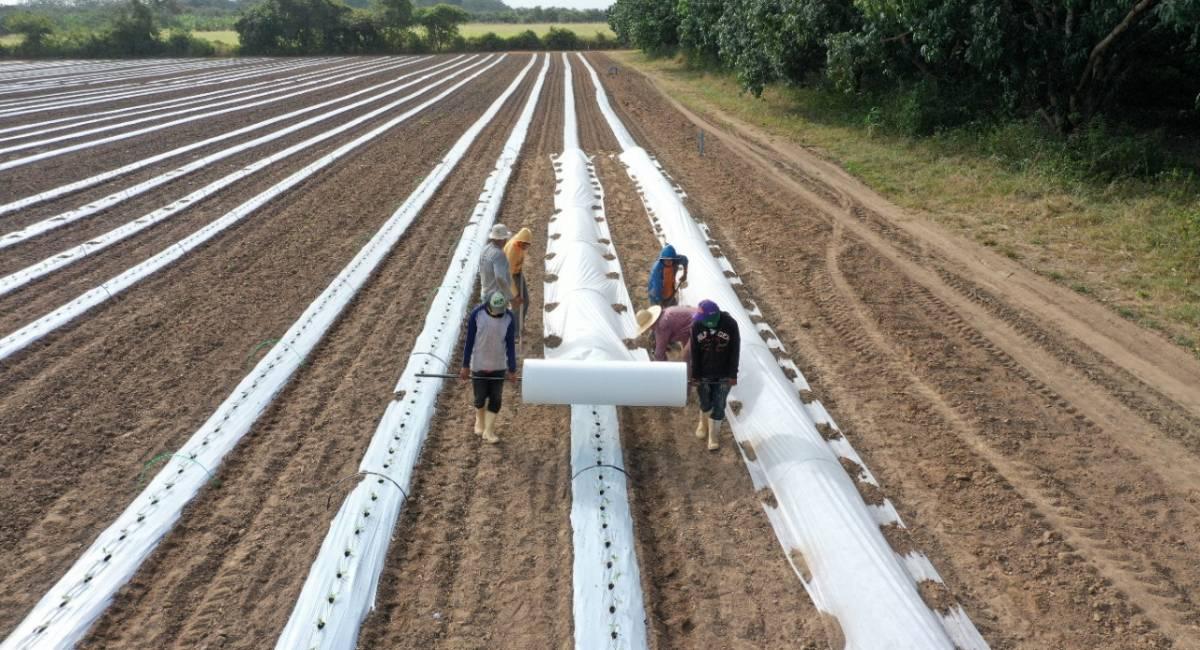 FORTALECENDO A FRUTICULTURA | Governo de Roraima trabalha para alavancar a produção de frutas